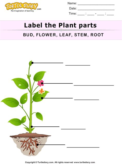 label  plant parts worksheet turtle diary