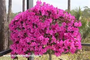 unique flower arrangements azalea tree unique floral arrangements by fisher