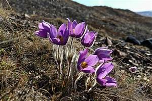 Tundra Plant Facts