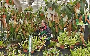 Jardinerie Belgique Frontiere : floralux dadiz le en flandre belgique ~ Nature-et-papiers.com Idées de Décoration