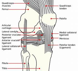 What Your Doctor Isn U0026 39 T Telling You About Runners Knee And