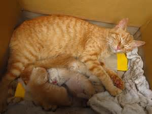 Mother and Baby Cat