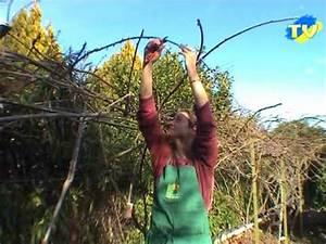 Tailler Les Kiwis : la taille de l 39 arbre kiwis youtube ~ Farleysfitness.com Idées de Décoration