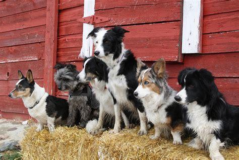 farm dogs dirt simple