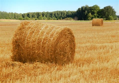 Hay Field Nature · Free Photo On Pixabay