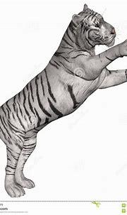 White Tiger Cartoon Wallpaper - cartoon wallpaper
