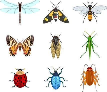Free Vector Insects Free Vector Download (751 Free Vector