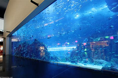 the dubai mall aquarium uae 2010 dubai mall aquarium underwater zoo gold souk part 1 mithun on the net