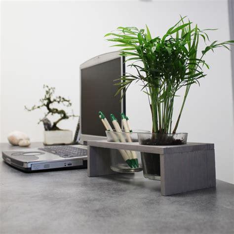 plante de bureau lifeimprover traditionel evergreen
