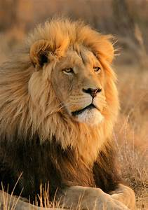 great, migration, african, safari