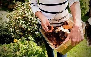 benefits of coffee grounds in vegetable garden slick garden