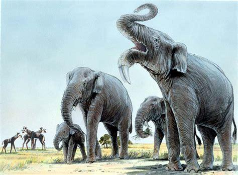miocene uae stegotetrabelodon elephants