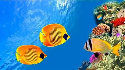 Sea Ocean Fish Underwater Sealife Nature Wallpapers