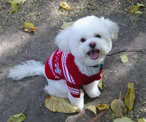 I Like My New Sweater Flickr P O Sharing