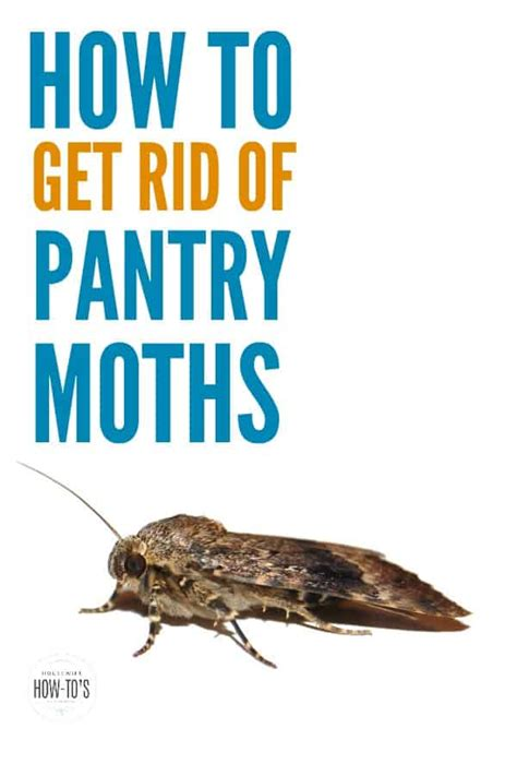 Getting Rid Of Pantry Moths Naturally How To Get Rid Of Pantry Moths Keep Them From Returning