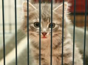 cat shelter reasons to spay or neuter your cat