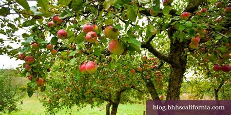 Fruit Trees Fit For Your Southern California Garden