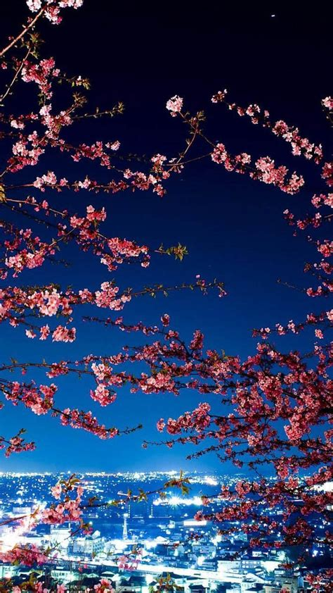 japan tokyo cherry blossoms city lights cityscapes