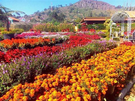 indahnya bunga bunga cantik   taman bunga indonesia