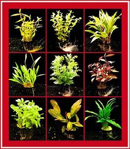 Welchen Dünger Für Aquarienpflanzen : 5 t pfe sch ne aquarienpflanzen mit ~ Michelbontemps.com Haus und Dekorationen