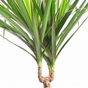 Grande Plante D Intérieur Facile D Entretien : grande plante d interieur facile d entretien ~ Premium-room.com Idées de Décoration