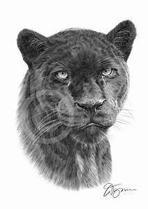 BLACK PANTHER pencil drawing art print A4/A3 sizes african ...