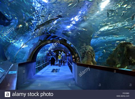 in the aquarium of san sebastian donostia basque country spain stock photo royalty free