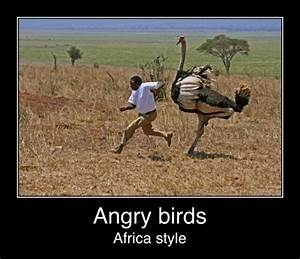 Funny African Q... Shona Funny Quotes