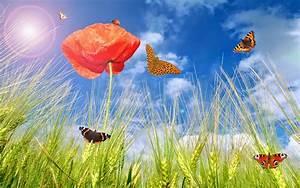 Blumen Im Sommer : hd sommer hintergrundbilder hd hintergrundbilder ~ Whattoseeinmadrid.com Haus und Dekorationen