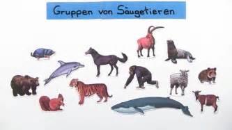 sofa preise säugetiere einteilung in klassen und gruppen