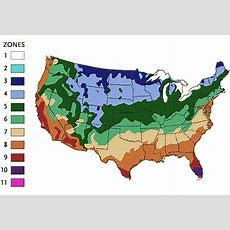 What Is My Plant Hardiness Zone? Usda Climate Plant