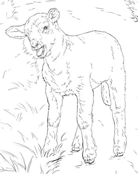 lamb coloring page  printable coloring pages