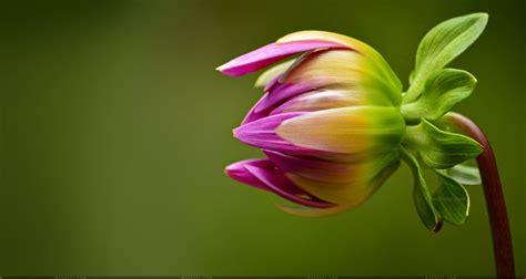 beautiful flower wallpapers   desktop mobile