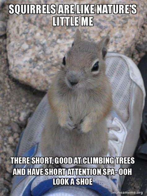squirrel meme funny squirrel pictures
