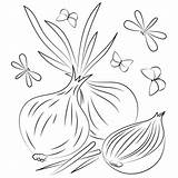 Coloring Onion Pages Printable sketch template