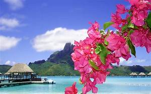 Flowers, Bougainvillea, Tropical, Platforms, sea - Flowers ...