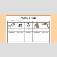Animal Group Worksheet  Science Resource Twinkl