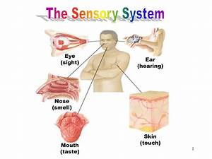 Opinions on Sensory system