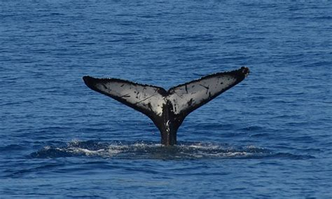 San Diego Boat Tours Groupon by San Diego Whale Up To 56 San Diego Ca