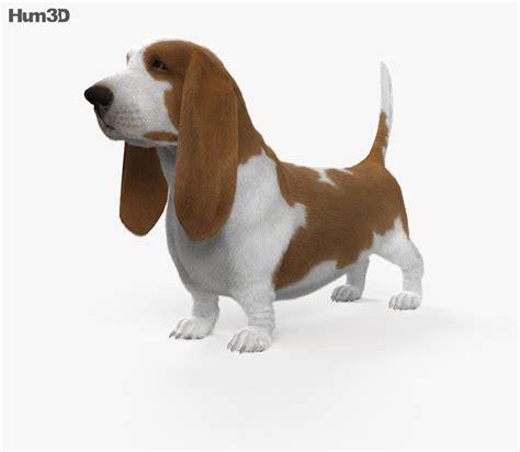 basset hound hd  model humd