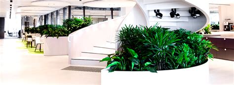 Office Plants, Living Walls & Scenting - Ambius