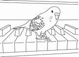 Parakeet Coloring Pages Budgies Parakeets Colouring Cockatiel Birds Cool Clarabelle Print Easy Reference Happy Some Birthday Books sketch template