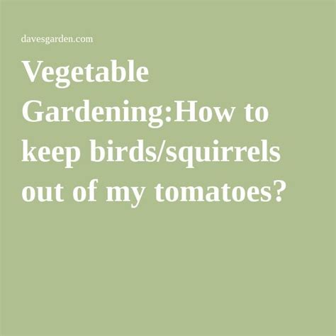 how to keep squirrels out of your garden 12 best images about gardening attracting friends