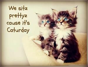 Caturday 2014: Cute Cat Gifs + Funny Kitten Pics