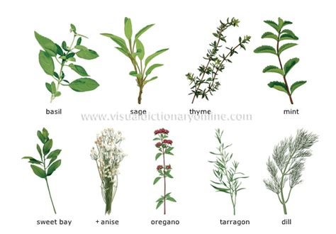 plantes aromatiques cuisine food kitchen food herbs 1 image visual