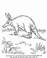 Aardvark Coloring Animal Pages Drawings Drawing Animals Colouring Printable Wild Print Honkingdonkey Identification Activity Wildlife Designlooter sketch template