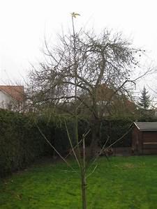 Apfelbaum Wann Schneiden : apfelbaum schneiden frisch gepflanzt junger baum mein sch ner garten forum ~ Frokenaadalensverden.com Haus und Dekorationen