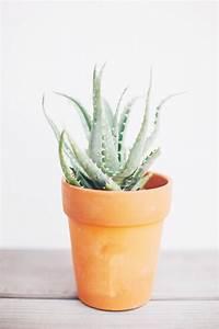 Arrosage Aloe Vera : 5 plantes d 39 int rieur faciles d 39 entretien lili in wonderland ~ Nature-et-papiers.com Idées de Décoration