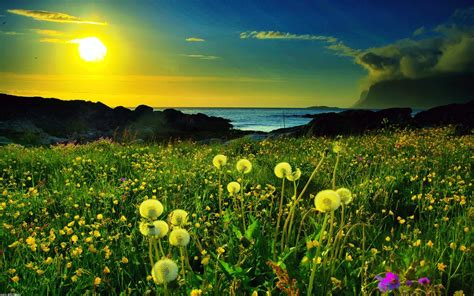 绿色自然风景高清桌面壁纸_桌面壁纸_电脑桌面壁纸高清_图片 ...