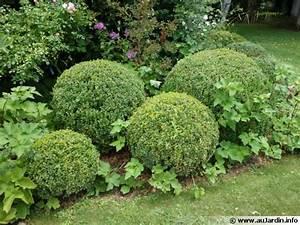 Boule De Buis : tailler en rondeur ~ Melissatoandfro.com Idées de Décoration